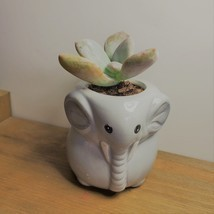 "Elephant Pot with Succulent, Live Plant in Grey Ceramic Planter 2"" - $14.99"