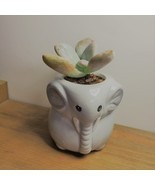 Elephant Pot with Succulent, Live Graptopetalum Plant in Grey Ceramic Pl... - £10.99 GBP