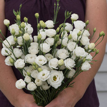 Doublini White Pelleted Lisianthus Seed  / Lisianthus Flower Seeds - $17.00