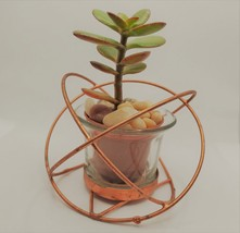 "Baby Jade Succulent in Rose Gold Planter, Crassula Plant, Metal Glass Pot, 4"" image 5"