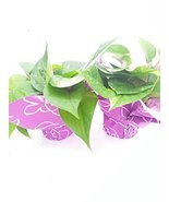 Two Golden Devil's Ivy Pothos 4'' Pot - Gift Wrapped Plant From Jmbamboo - $25.46