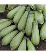 50 Seeds Squash Seeds Hurakan Seeds F1 Hybrid Vegetable Seed TkMorebargins - $39.60