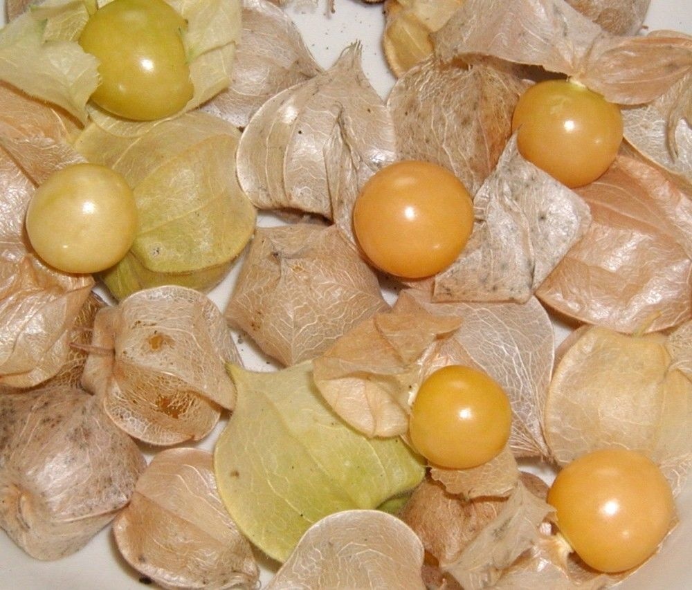 Pineapple tomatillo ground cherry seeds heirloom non gmo for Pineapple in the ground