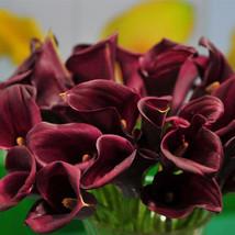 Hot sale true calla lily bulbs, Beautiful Multi colors, perennial garden... - $4.00