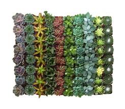 Shop Succulents | Assorted Collection of Live Succulent Plants, Hand Sel... - $411.75