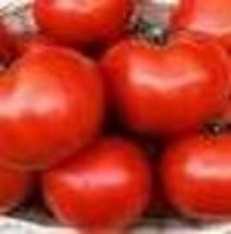 Tomato - Floradade - Non-Hybrid - Non-GMO - St. Clare Heirloom Seeds - $2.25