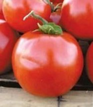 1/4 Oz Seeds of Manitoba Tomato - $38.61