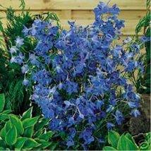 Delphinium / Larkspur - Butterfly Blue- 50 Seeds - $1.29