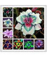 mixed seed 30 Pcs/Lot Hybrid Bright Daylily Flowers Bonsai Plants Hemero... - $6.38