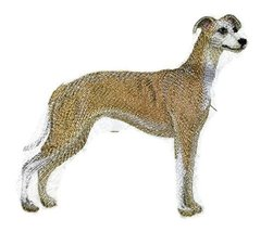 "Amazing Custom Dog Portraits[Whippet] Embroidered Iron On/Sew patch [5"" ... - €8,51 EUR"