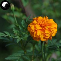 Buy Tagetes Patula Flower Seeds 60pcs Plant Garden Flower Tagetes Patula - $5.99
