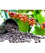 DWARF COFFEE PLANT 10 seeds - Tropical Coffee house plant - $3.99