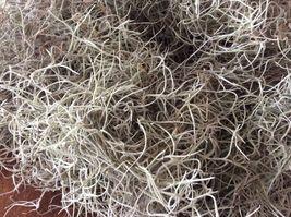 1 Gallon Bag - Live Saint Augustine Spanish Moss - Overstuffed  - $9.99