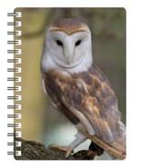 Barn Owl 3D Notebook - $5.23