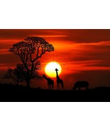 Giraffe Sunset -  Art Picture Poster Photo Print 5ANML - $14.99+