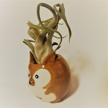 "Kangaroo Pot with Curly Air Plant, Ceramic Animal Planter 2"", Live Tillandsia image 6"