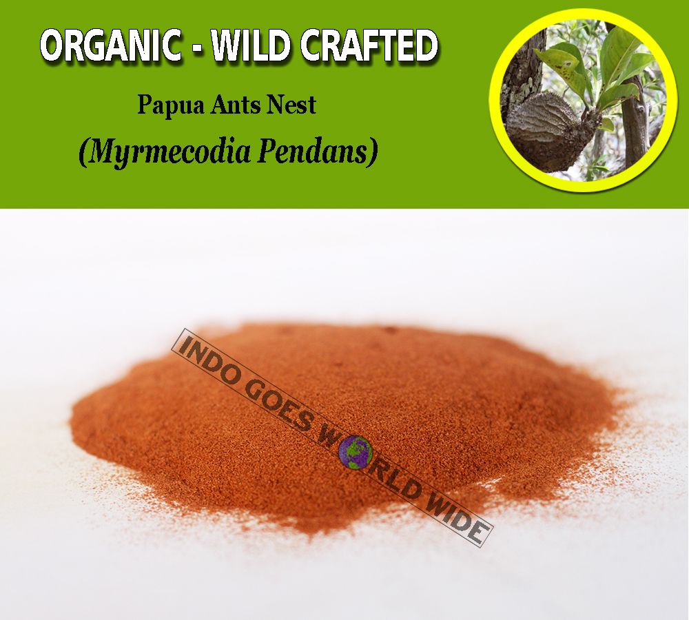 POWDER Papua Ant Nest Myrmecodia Pendans Organic WildCrafted Fresh Natural Herbs