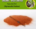 Sarang semut thumb155 crop