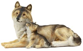 """Atlantic Collectibles Alpha Gray Wolf Family Figurine 9.75""""L Timber Wolf Mother  - $22.99"""