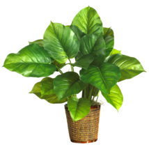 "29""  Large Leaf Philodendron Silk Plant  (Real Touch) - $68.04"