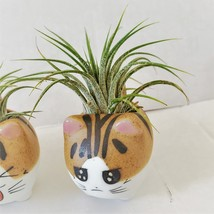 """Air Plant in Cat Planter 3"""", Kitty Ceramic Pot with Emotion Face image 3"""