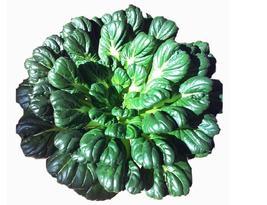 Wuta-tsai Chinese Black Vegetables Seeds Original Pack, 40 Seeds / Pack Green  - $13.68