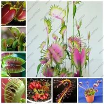 Free shipping Dionaea Muscipula Giant Clip Venus Fly trap plants 300PCS ... - $5.34