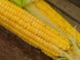 Outdoor Living- 50++ Seeds Early Golden Bantam Sweet Corn Seeds - SBF - $25.95