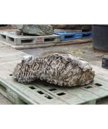Hazuishi Stone, Japanese Ornamental Rock - YO06010333 - $2,485.59