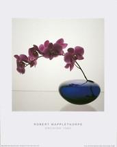 Robert Mapplethorpe-Orchids (1985)-Poster - $70.13