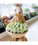 Succulent Echeveria 'Lovely Rose' Rosette Wedding Favor and Gifts  Live ... - $19.99