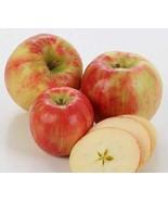 Fresh-Picked Honeycrisp Apples (Box of 16 Apples) - $43.11