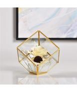 Square Glass Geometric Terrarium Succulent Fern Moss Tabletop Terrarium Box - $15.66