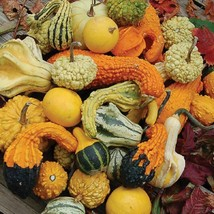 Gourds Seeds - Large Mix -Yard, Garden & Outdoor Living - Free Shipping - $31.99+