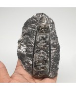 """297.2g,4.5""""x2.9""""x1.2"""" Fossils Orthoceras (straight horn) SQUID @Morocco,... - $8.80"""