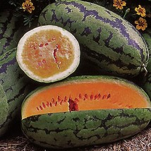 SHIPPED From US, Orangeglo Orange Flesh Watermelon Heirloom, 50 seeds RM - $28.99