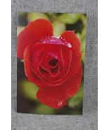 Photo Notecard Candelabra Grandiflora Rose bloom and Rain Drops. 4x6 Bla... - $4.25