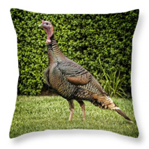 Wild Turkey, Throw Pillow, fine art, seat cushi... - $41.99 - $69.99