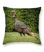 Wild Turkey, Throw Pillow, fine art, seat cushion, birds - $41.99+