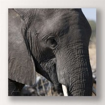 "28"" Stretched Canvas Elephant Print - Color Photo Print Elephant Close Up"