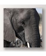 "28"" Stretched Canvas Elephant Print - Color Photo Print Elephant Close U... - $69.29"