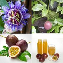 50 Seeds Purple Passiflora Edulis Passion Fruit Seeds Maracuy Fruit Bonsai - $6.08