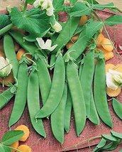 1 ounce seed Snow Peas Oregon Giant - $16.71