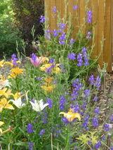 100pcs Fresh Seeds Beautiful 4 Feet Blue Purple Larkspur Delphinium #IMA51 - $13.99