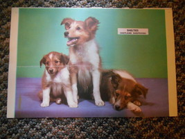Old Vintage Calendar Picture Print Shelties Shetland Sheepdogs Puppies O... - $9.99