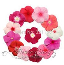 100 Periwinkle seeds , Mix Color Vinca (Catharanthus roseus),a perfect bank cove - $7.00