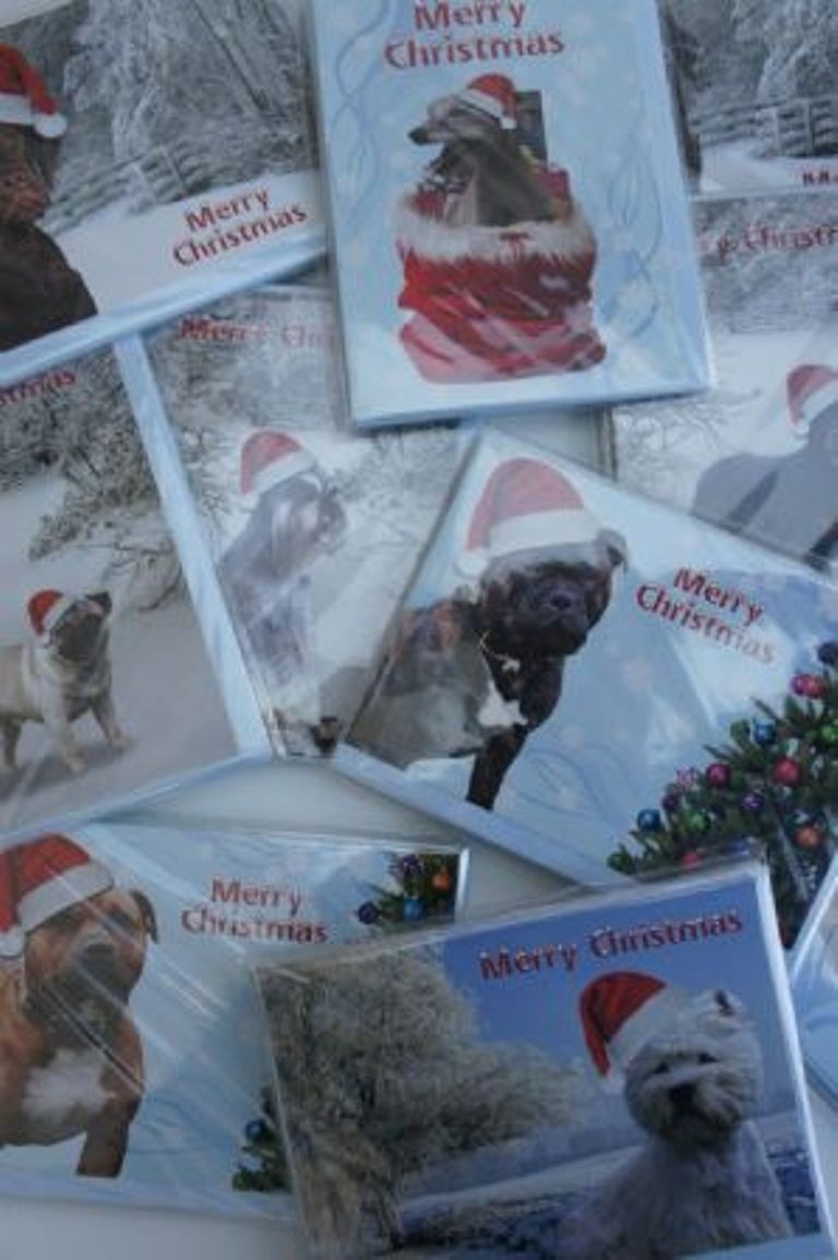 Primary image for Christmas cards with photos of many breeds, Pug, spaniel, collie, greyhound etc