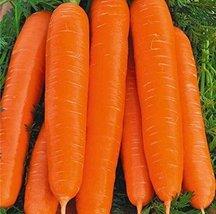 4g / 2400 Seeds of Carrots Berlikumer - $18.93
