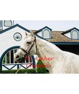 COLOR PHOTO - 8x10 Holy Bull  at Jonabell Farm - 1994 Horse of The Year ... - $8.00+