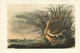 VINTAGE JOHN JAMES AUDUBON BIRD DOUBLE PAGE PRINT ~ LONG-BILLED CURLEW - $75.33